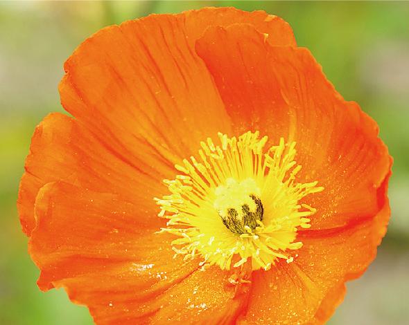 ORANGE/橙